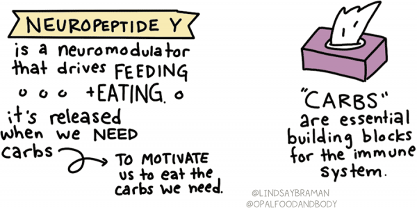 Neuropeptide Y (written on top of a yellow banner) is a neuro-modulator that drives feeding and eating. Neuropeptide Y is released when our body needs carbs in order to motivate us to eat those carbs.  Among other things, carbs are essential building blocks for the immune system – which highlights how intuitive eating can benefit the body during a pandemic or even just a typical cold and flu season. Above this text is a drawing of a pink tissue box.