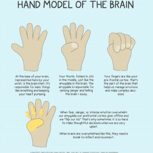 Hand Model of the Brain – A Doodle-Illustrated Learning Resource